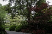 view Atherton -- Camellia Hedges digital asset: Atherton -- Camellia Hedges