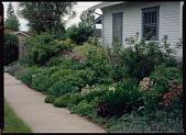 view Windsor -- Lauren Springer's Windsor, Colorado Garden digital asset: Windsor -- Lauren Springer's Windsor, Colorado Garden