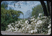 view Washington -- Dumbarton Oaks digital asset: Washington -- Dumbarton Oaks