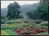 view Mixed Annuals, Borders and Bedding digital asset: Mixed Annuals, Borders and Bedding