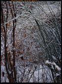 view Winter digital asset: Winter