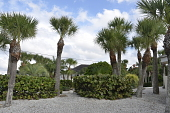 view Nokomis -- A Gulf Seaside Garden digital asset: Nokomis -- A Gulf Seaside Garden
