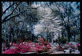 view Savannah -- Bonaventure Cemetery digital asset: Savannah -- Bonaventure Cemetery
