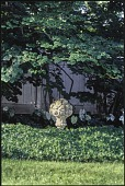 view Winnetka -- Nantucket Garden digital asset: Winnetka -- Nantucket Garden