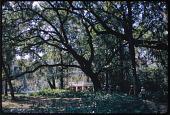 view St. Francisville -- Oakley Plantation digital asset: St. Francisville -- Oakley Plantation