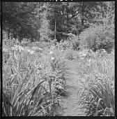 view Boston -- Sheldon Garden digital asset: Boston -- Sheldon Garden