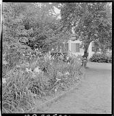 view Boston -- Merry Garden digital asset: Boston -- Merry Garden