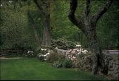 view Westport -- Armknecht Garden digital asset: Westport -- Armknecht Garden