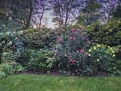 view Hingham -- Hingham Cutting Garden digital asset: Hingham -- Hingham Cutting Garden