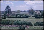 view Harwood -- Tulip Hill digital asset: Harwood -- Tulip Hill