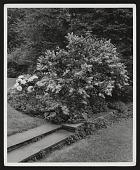 view Upper Montclair -- Berrall Garden digital asset: Upper Montclair -- Berrall Garden