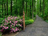 view Princeton -- Stony Wood Garden digital asset: Princeton -- Stony Wood Garden
