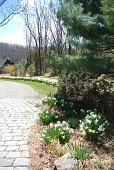 view Gladstone -- Christina's Garden digital asset: Gladstone -- Christina's Garden