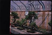 view Brooklyn -- Brooklyn Botanic Garden digital asset: Brooklyn -- Brooklyn Botanic Garden