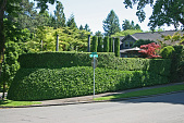 view Portland -- Teasdale Garden digital asset: Portland -- Teasdale Garden
