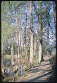 view Charleston -- Middleton Place digital asset: Charleston -- Middleton Place