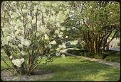 view Murrells Inlet -- Brookgreen Gardens digital asset: Murrells Inlet -- Brookgreen Gardens