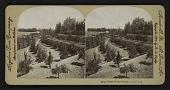 view Orange Grove, Riverside, Cal., U.S.A. digital asset: Orange Grove, Riverside, Cal., U.S.A.