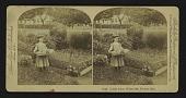 view Little Alice, White Mt. Flower Girl digital asset: Little Alice, White Mt. Flower Girl