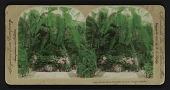 view Conservatory, Horticultural Park, Toronto, Canada digital asset: Conservatory, Horticultural Park, Toronto, Canada