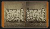 """view [Funerary floral arrangement]: floral pillow, """"Bertie."""" digital asset: [Funerary floral arrangement]: floral pillow, """"Bertie."""""""