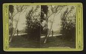 view Bridge, Forest Park, St. Louis, Mo. digital asset: Bridge, Forest Park, St. Louis, Mo.