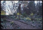 view Knoxville -- Lothrop Garden digital asset: Knoxville -- Lothrop Garden