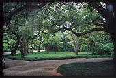 view Dallas -- Marsh Garden digital asset: Dallas -- Marsh Garden