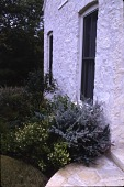 view Austin -- Osborn Garden digital asset: Osborn Garden 1992