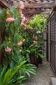 view Houston -- Orchid Garden digital asset: Houston -- Orchid Garden