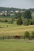 view Orange -- Windholme Farm digital asset: Orange -- Windholme Farm