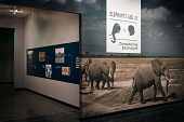 view Theodore Roosevelt, Hunter-Naturalist digital asset number 1