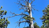 view Europe's Oldest Known Tree Discovered in Italy digital asset number 1