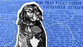 view When Don the Talking Dog Took the Nation by Storm digital asset number 1
