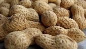 view Promising Peanut Allergy Treatment Could Become Available in the Near Future digital asset number 1
