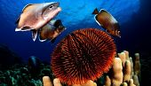view Chile Announces Protections for Massive Swath of Ocean With Three New Marine Parks digital asset number 1