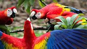 view A Macaw Breeding Center Supplied Prehistoric Americans With Prized Plumage digital asset number 1