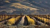 view This Secret Corner of California Is a Paradise for Lovers of Great Food and Top-Notch Wines digital asset number 1