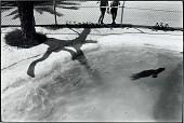view Untitled (Seal in Pool) digital asset number 1