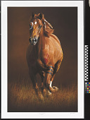 view Sioux War Pony digital asset number 1