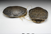 view Turtle shell digital asset number 1