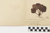 view Mounted plant specimen digital asset number 1