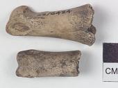 view Animal bone digital asset number 1