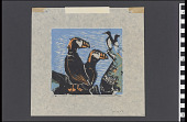 view Tufted Puffins digital asset number 1