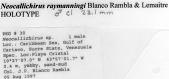 view Neocallichirus raymanningi Blanco Rambla & Lemaitre, 1999 digital asset number 1