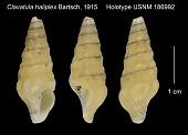 view Clavatula haliplex Bartsch, 1915 digital asset number 1