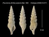 view Pleurotoma (Drillia) polytorta Dall, 1881 digital asset number 1
