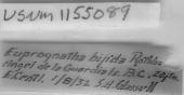 view Euprognatha bifida Rathbun, 1894 digital asset number 1