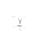 view Kogia breviceps (de Blainville, 1838) digital asset number 1