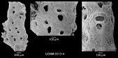 view Gemelliporella punctata Canu & Bassler, 1919 digital asset number 1